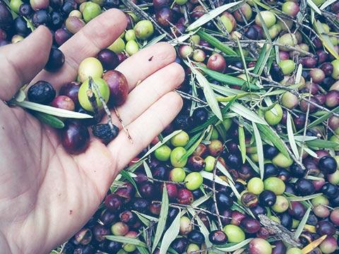 Cata de aceite de oliva