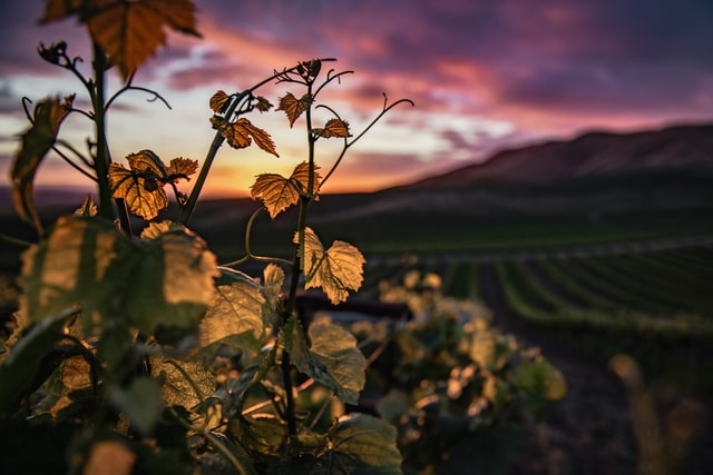 cata de vino organico en ronda